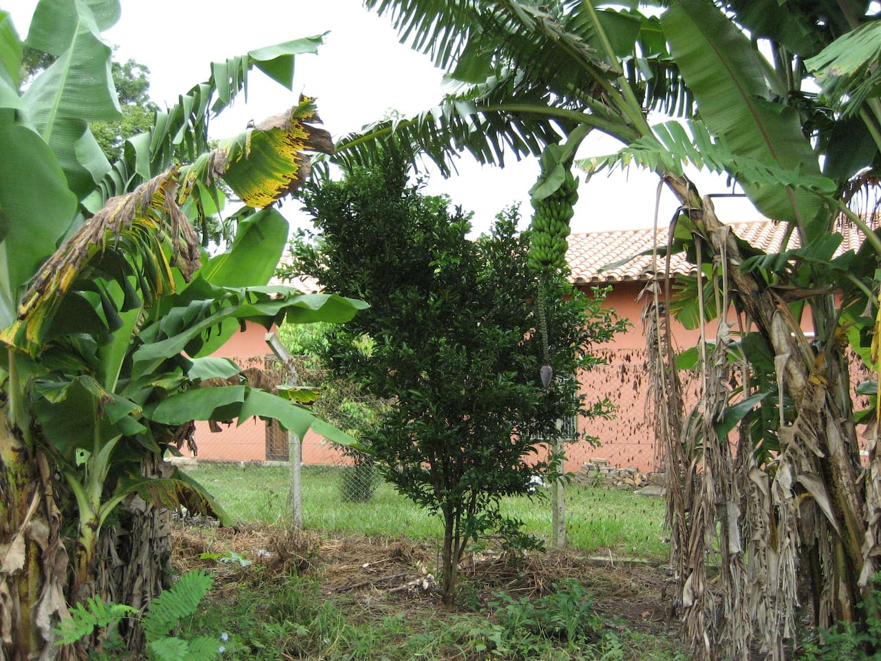 Side view from orange, banana and pineapple orchard (pineapples in December, oranges in May-July, bananas whenever)