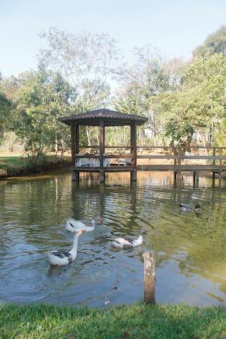 Natureza e tranquilidade em Ipiabas - Barra do Piraí - Talo