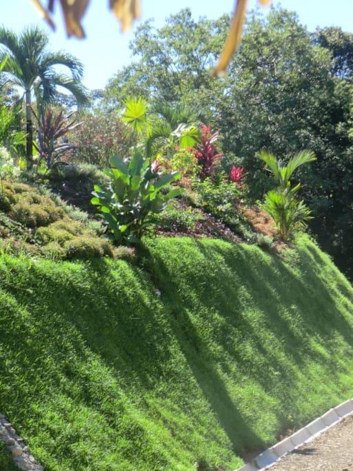 vue sur la butte décorée de plantes et fleurs tropicales
