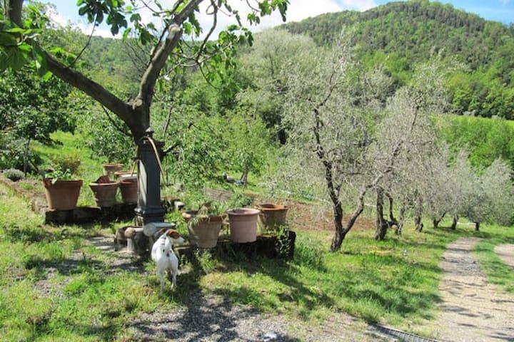 Campagna Toscana, Natura e Relax - Micciano - Dom