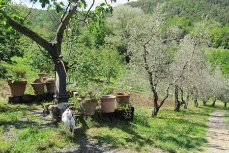 Campagna Toscana, Natura e Relax - Micciano - Casa