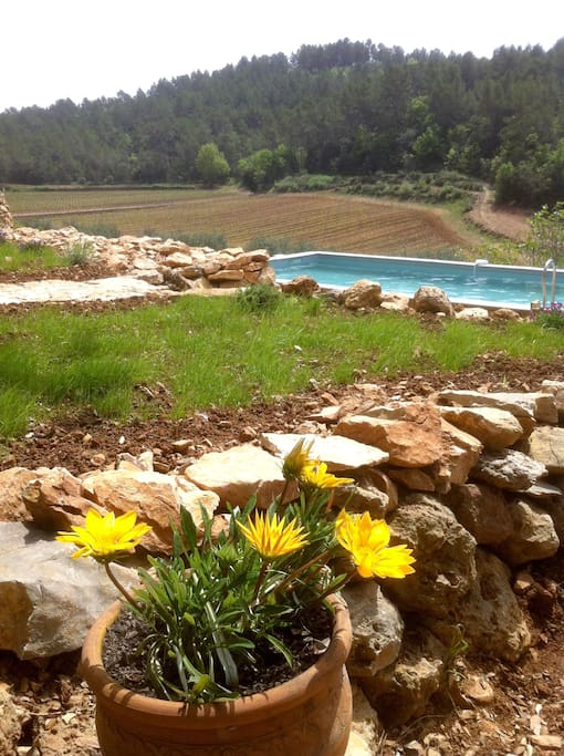 8x4 meter wide Private pool with a breathtaking view on the surrounding vineyards