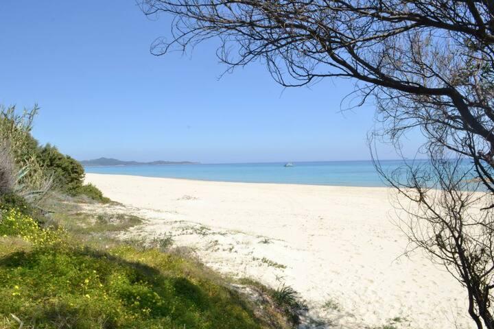 Sardinian dream :)