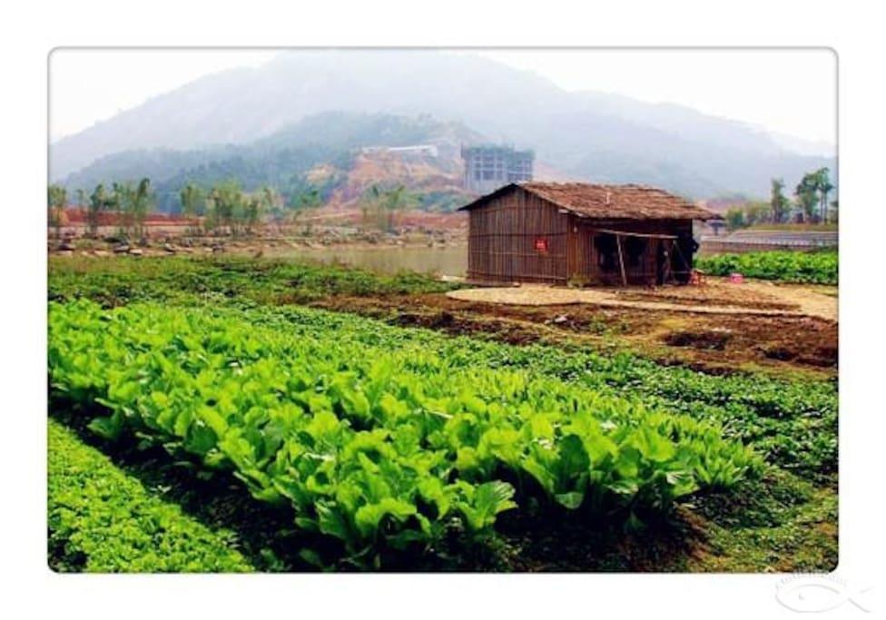 开心农场, 您可以在这里摘菜, 种菜,