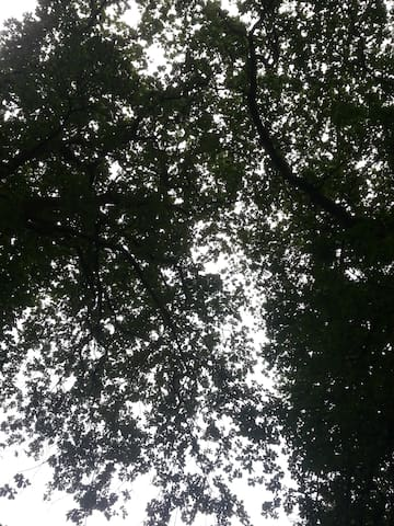 Baumkronen-Himmel