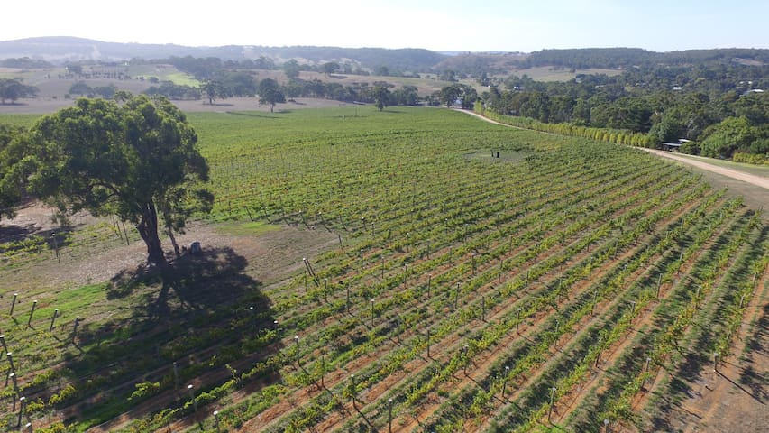 Adelaide Hills vineyard studios - Macclesfield - Outro