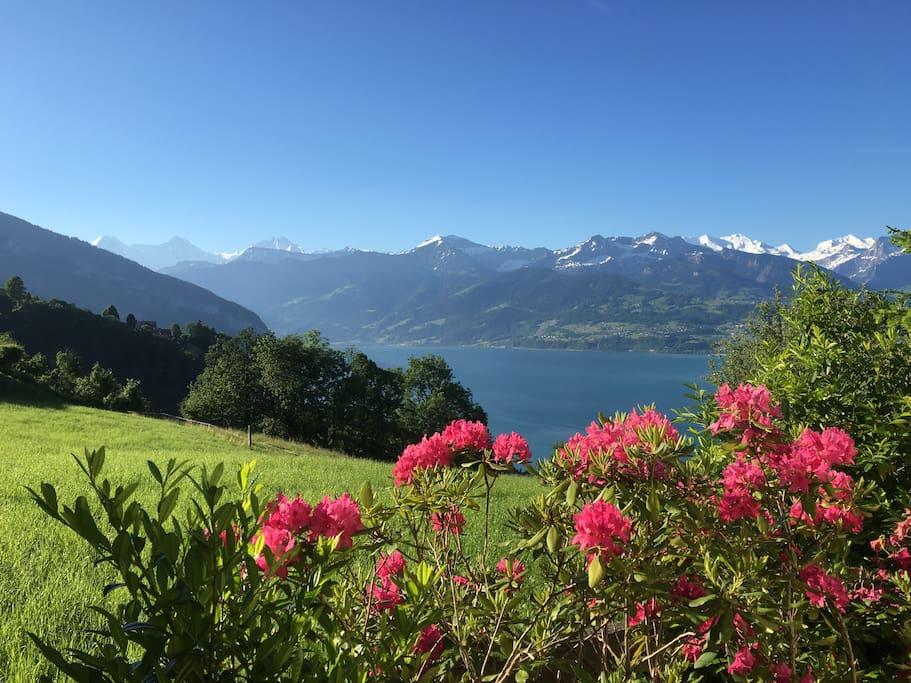 View from Guesthouse Anna in Aeschlen ob Gunten - Bernese Oberland - Switzerland
