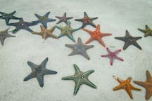Starfish everywhere.
