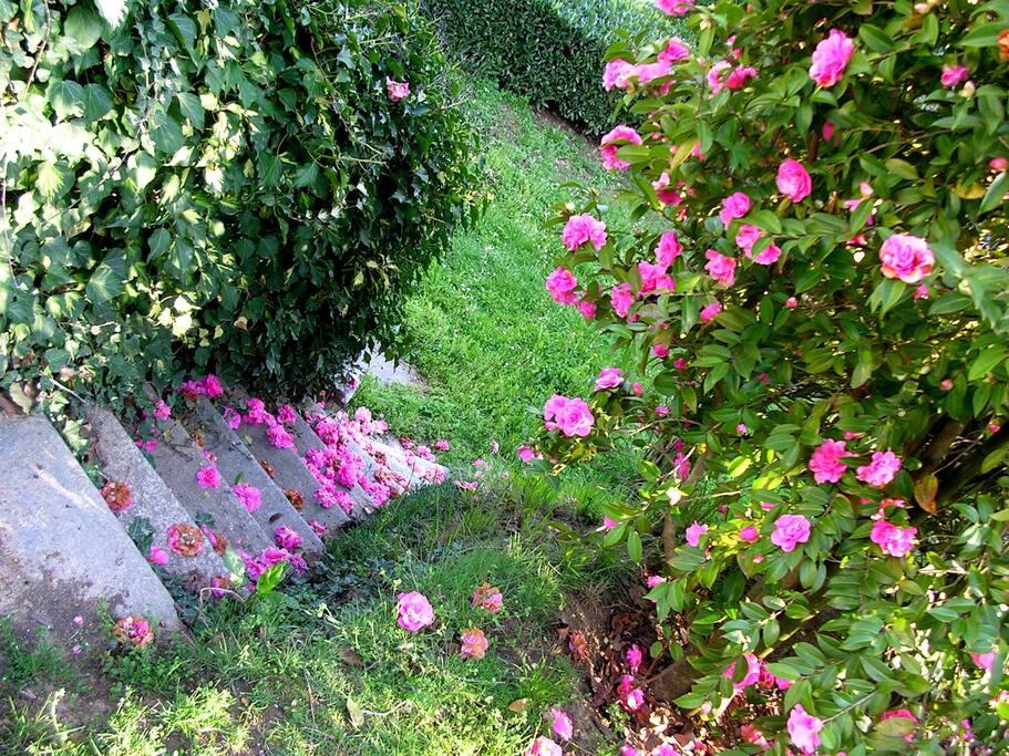 Scala giardino