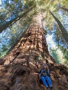 ~ Giant Sequoias, Too ~ 2 BEDS ~