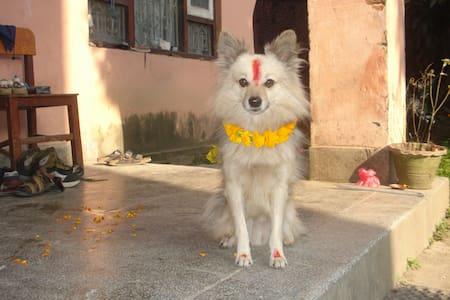 Home sweet Home - Kathmandu