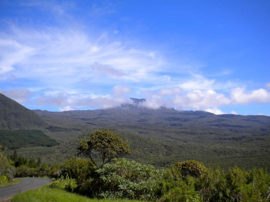 "Nos montagnes ""Forêt primaire"""