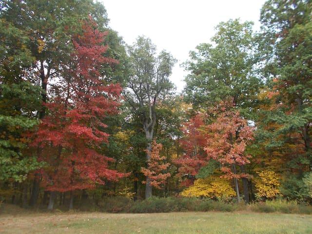 Fall foliage  10/12/15