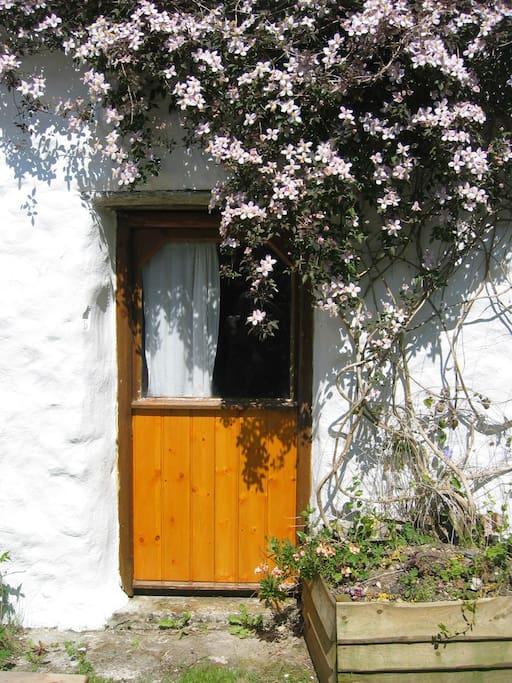 Cowshed door with clematis