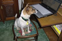 Our Jack Russel (Katy) in the small sitting room