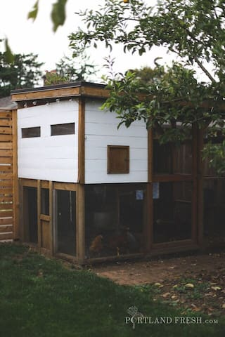 Backyard chicken coop. Photo by Christiann Koepke with Portland Fresh.