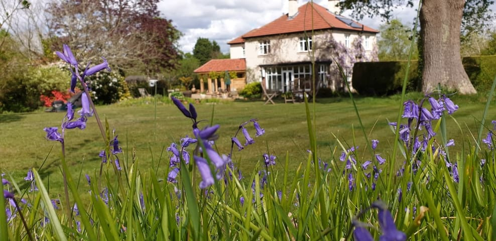 New Forest country house B&B