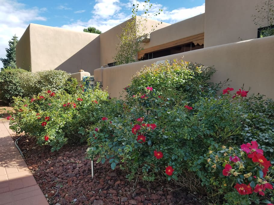 desert blooms welcome you to Casa St Francis
