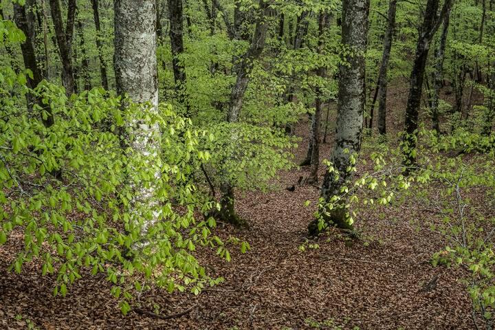 La forêt avant d'arriver au gîte! Woods around the gite