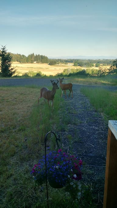 front porch view with local wildlife.