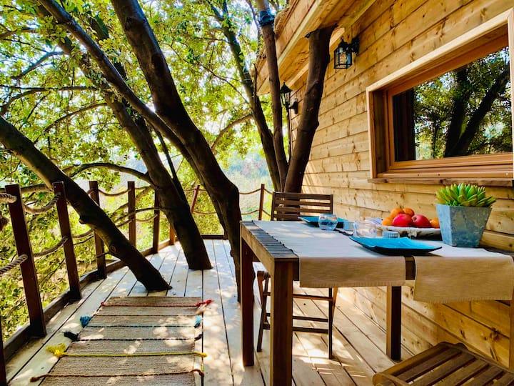 Cabane perchée dans les arbres  de Cassis