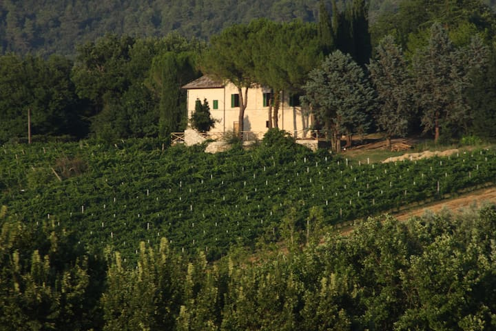 Il Vigneto - Country Farm - Spoleto - Spoleto - Penzion (B&B)