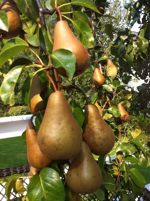 Fruit trees thrive in our wonderful climate.