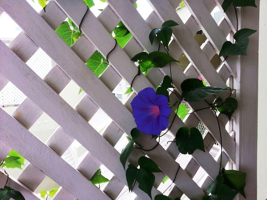 Цветы на балконе / Flowers on balcony
