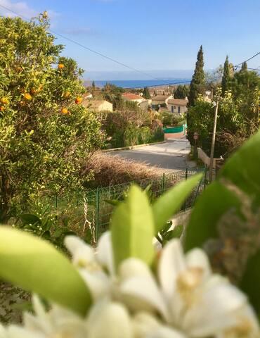 vue de la terrasse au mois de mars, avec les fleurs d'oranger