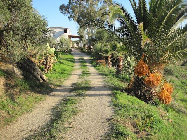 L'Agave e la Palma Nana - Ribera - Huvila