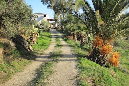 L'Agave e la Palma Nana - Ribera