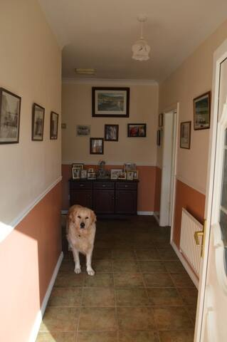 Hallway Entrance greeted by Buster the Golden Retriever