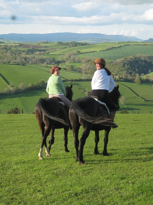 Fantastic horse riding & dog walking area
