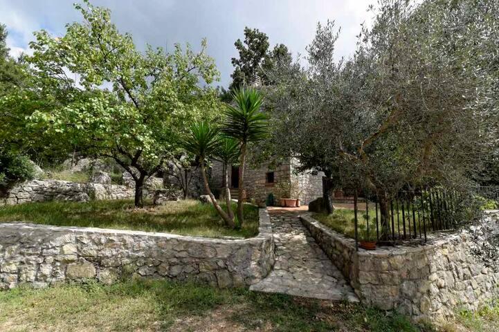 La Ripa di Campo Soriano : L' Olmo (the Elm)