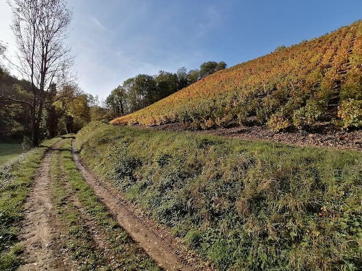 Gîte du cuvage au cœur du vignoble Beaujolais