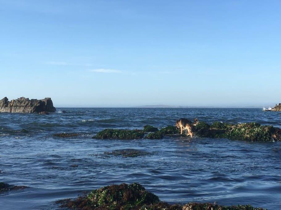 Playa Negra, Concon 5 miles away home