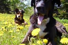 Max et charlow les amis du domaine!