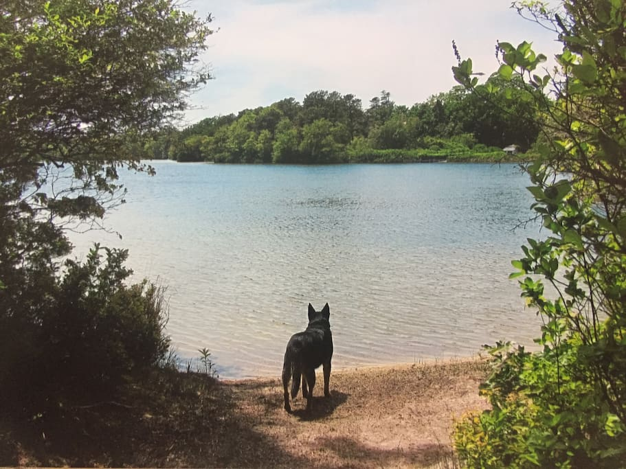 Your private Lake Beach-the water is clean, warm, and ideal for swimming!