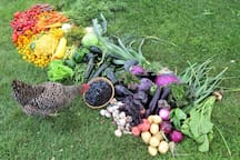An array of the vegetables we grow and sell at our farm stand