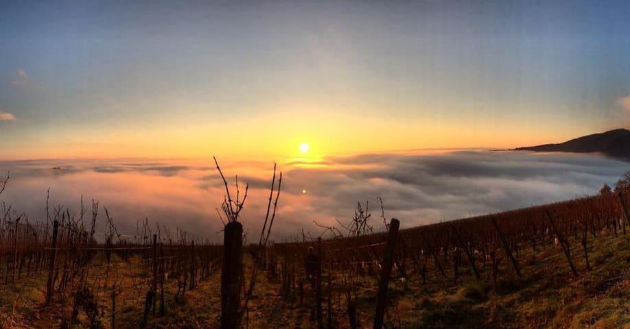 Into the vineyard - Haut-Rhin - Daire