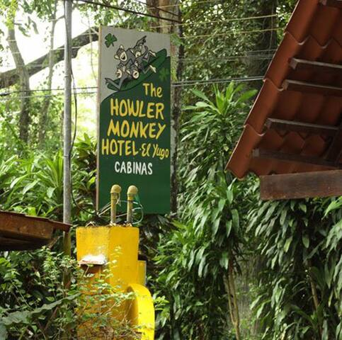 Welcome to the Howler Monkey Hotel