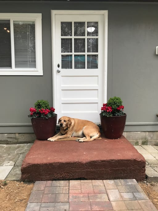 Pet-friendly with big fenced backyard.
