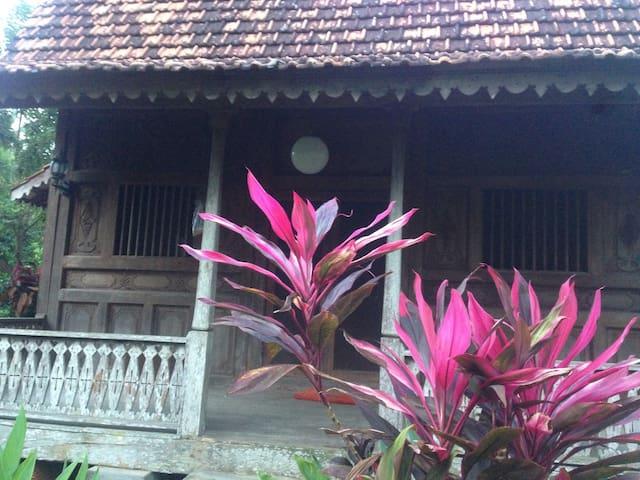Hidden sunny green - Singaraja - Bungalow