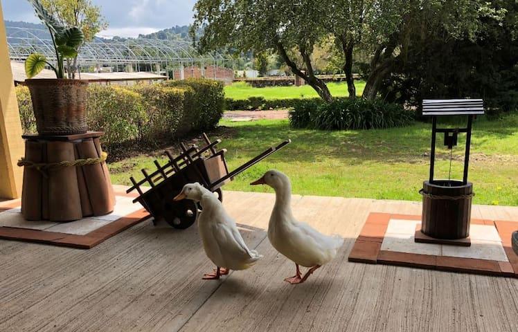 Villa Descubridora...reconecta con la tranquilidad
