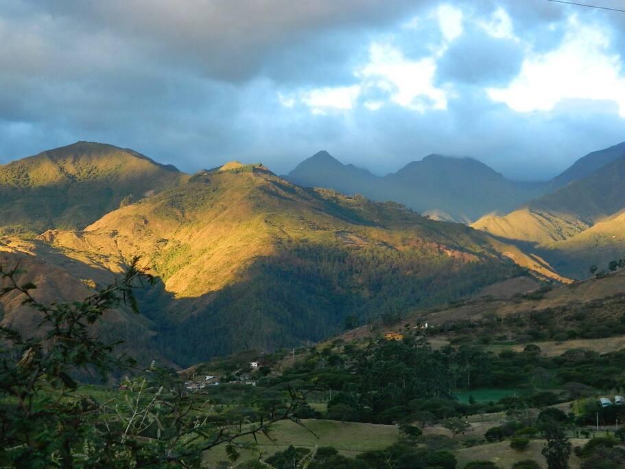 Your view of Podocarpus National Park