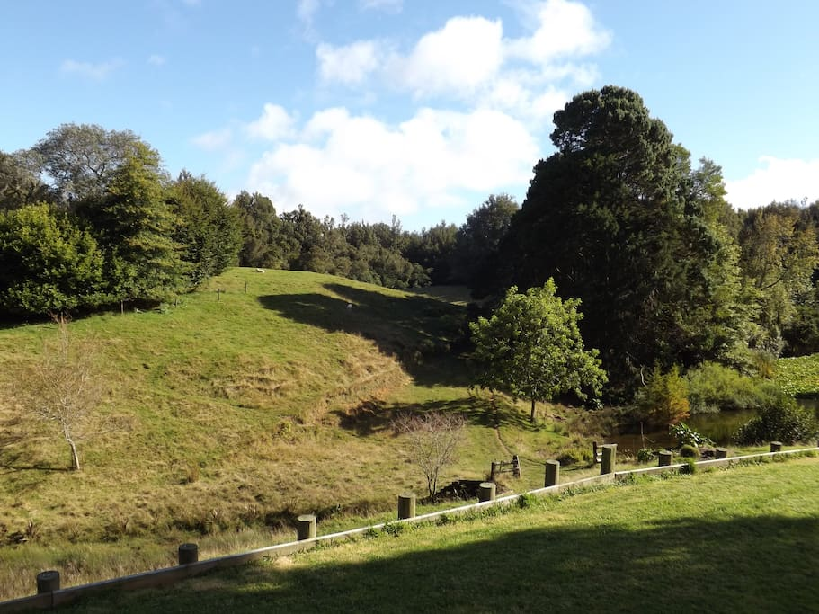 See the trees - the Puketoki Scenic Reserve borders our property