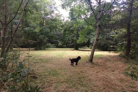 Woodland retreat pitch in Narracott woods