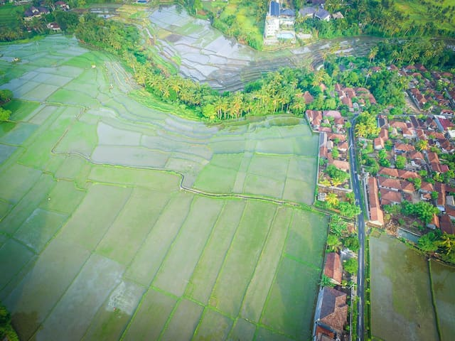 Traditional Village Rice Field 2BR