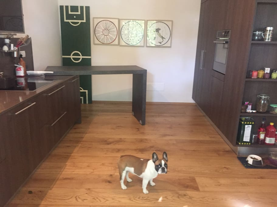 Fully equipped kitchen (it comes with the dog)