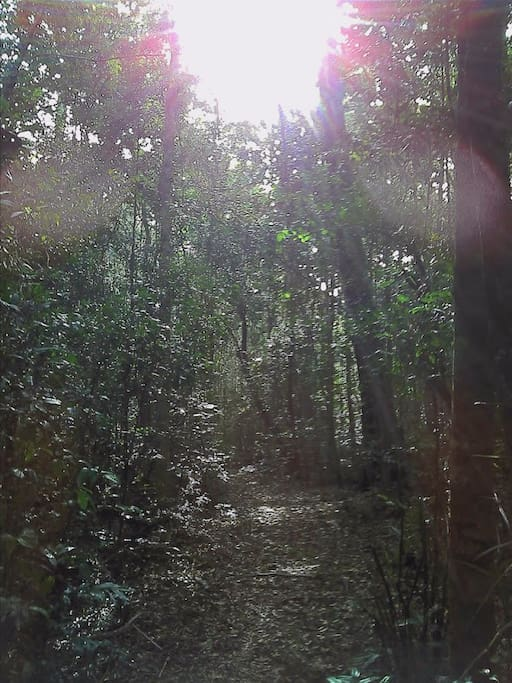 The forest walk leading to the water fall.